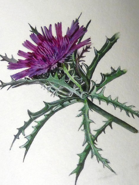 "Detalle de la ""flor"" de la etiqueta del vino Atractylis."