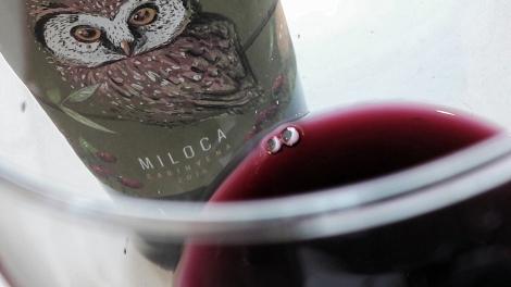 El vino Miloca Carinyena en la copa.